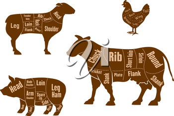 Chicken, pork, beef and lamb meat cuts scheme with marked parts and cutting lines, for butcher shop design