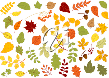 Maple, oak, birch, linden and herbs leaves set in red, yellow and orange autumn colors