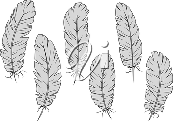 Gray quill feathers isolated on white. For education, writing, tattoo and embellishment design