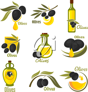 Olives black fruits with golden oil drops and glass bottles of olive oil, supplemented by branches of olive tree with green leaves. Agriculture and healthy food themes