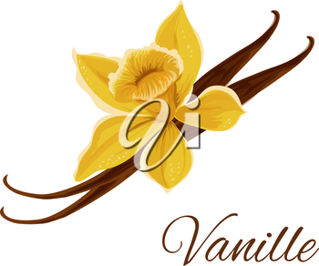 Vanille. Vector icon of vanilla pod with flower. Icon of flavor spice herb. Emblem of aromatic fruit plant for culinary condiment, cooking ingredient, package sticker, label design element