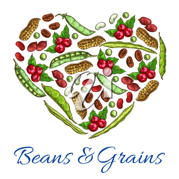 Heart of beans, grains. Vector symbol of nuts, coffee beans, peanuts in shell, beans and green peas, legume pods. Poster with plants seeds for vegetarian and vegan vegetable food nutrition or cuisine