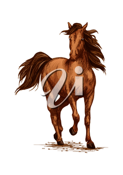 Racing or running horse. Arabian brown mustang galloping or trotting on sport races. Vector sketch farm or ranch stallion foal vector sketch. Symbol for equestrian horserace riding club, equine exhibi