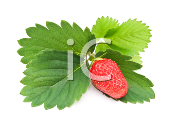 Royalty Free Photo of a Fresh Strawberry