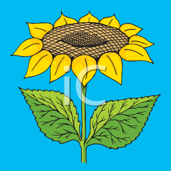 Royalty Free Clipart Image of a Sunflower on Blue