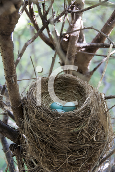 Royalty Free Photo of a Robin's Nest