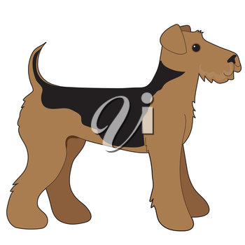 A cartoon illustration of an Airedale Terrier