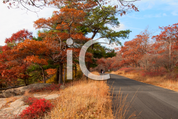 Royalty Free Photo of a Country Road in Autumn