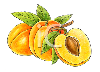 Royalty Free Clipart Image of Peaches