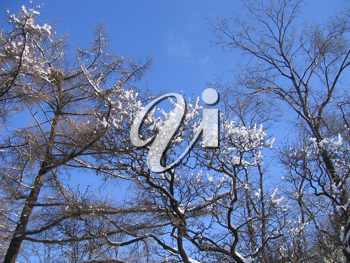 Winter trees on blue sky background