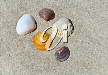 Sea shells on the sand background