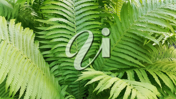 Illustration of background with green fresh fern branches