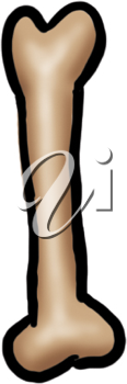 Royalty Free Clipart Image of a Bone