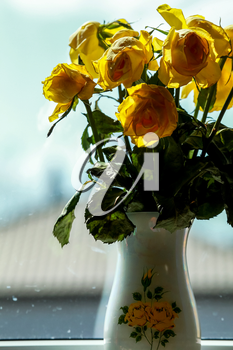 Wilted yellow roses in vase in window light. Vase with yellow roses. Flowers at the window. Yellow roses in vase at the window.