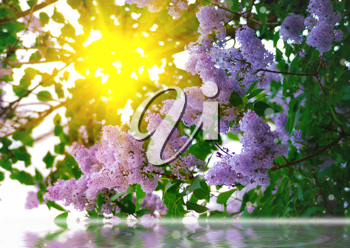 Branches of lilac on abstract background