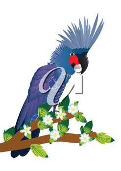Royalty Free Clipart Image of a Cockatoo
