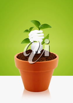 Royalty Free Photo of an Energy Saving Lightbulb Inside a Potted Plant