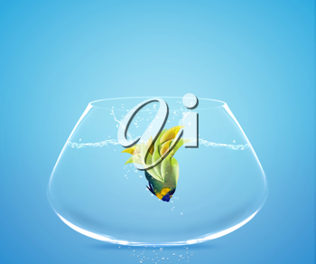 Angelfish jumping to other bowl, Good Concept for new love, freedom, liberty, independence, unrestraint, new Opportunity and challenge concept.