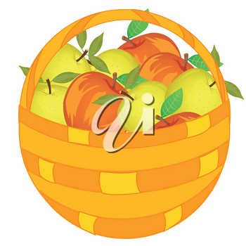 Vector illustration of the basket pervaded ripe apple