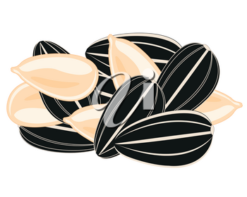 Vector illustration of the small circle ripe seeds sunflowe