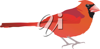 Royalty Free Clipart Image of a Red Bird