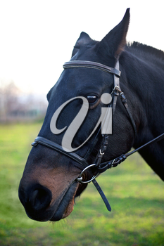 Royalty Free Photo of a Horse