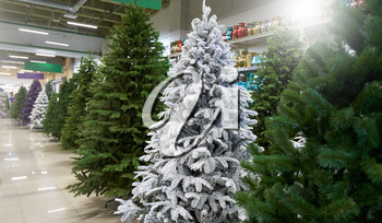 Sale of many artificial Christmas trees in green, purple and white at a decor store