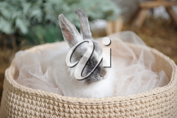 White rabbit sitting in a knitted basket. Head closeup.