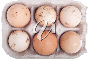 Royalty Free Photo of Six Eggs in a Carton