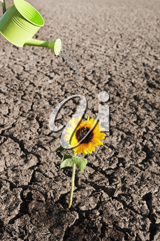 dry soil  of a barren land with single growing plant and watering can