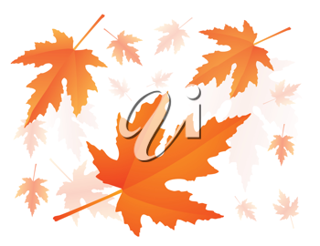 Royalty Free Clipart Image of Red Autumnal Falling Maple Leaves