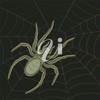Royalty Free Clipart Image of a Spider on Spiderweb