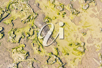 Royalty Free Photo of a Puddle of Slime