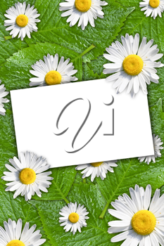 Royalty Free Photo of a Card on a Floral Background