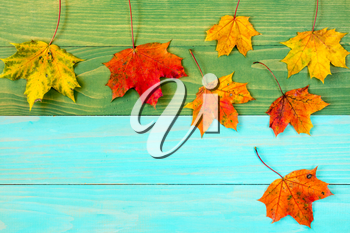 Colorful fall maple leaves on wooden background.Copy-space.