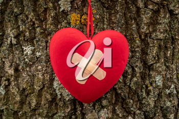 Wounded heart with bandage hanging on the tree bark