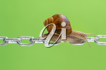 Garden snail crawling on the metal chain over a green background