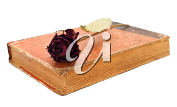 Rose on the closed book on white background