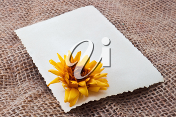 Blank card with yellow dry flower
