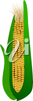 Royalty Free Clipart Image of an Cob of Corn