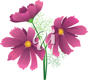 Royalty Free Clipart Image of Hibiscus Flowers