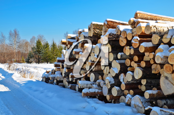 A pile of timber in the winter against the backdrop of trees, green pine and blue sky