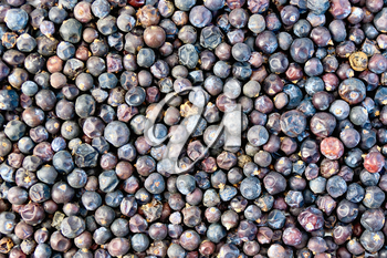 The texture of the dried juniper berries