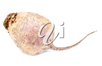 Royalty Free Photo of a Root Vegetable