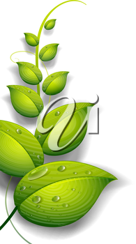 Illustration of a green plant with water drops on a white background