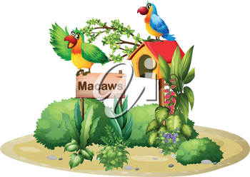 Illustration of the two colorful parrots above a signboard and a birdhouse on a white background