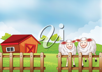 Illustration of the sheeps inside the wooden fence with a barn