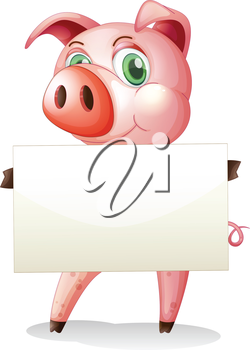 Illustration of a fat pig holding an empty signboard on a white background