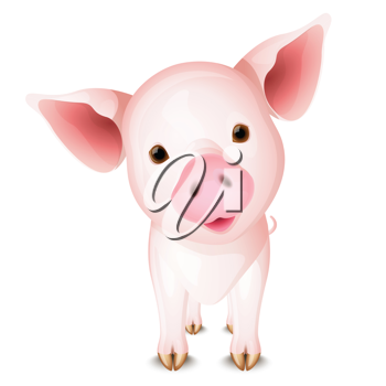 Little pink pig isolated on white background