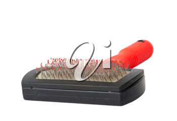 Royalty Free Photo of a Cat Brush